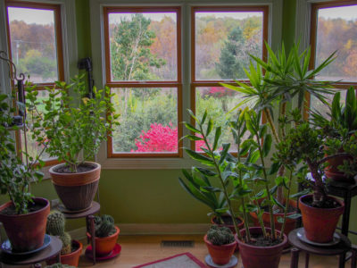 House Plants for Indoor Air Purification