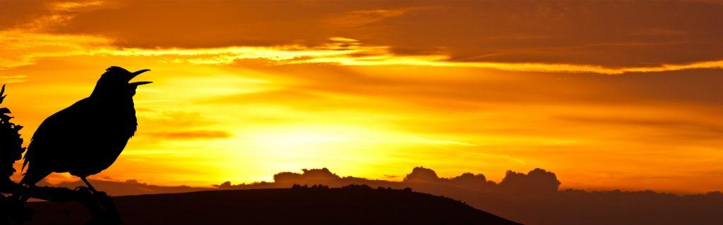 bird-singing-at-sunrise